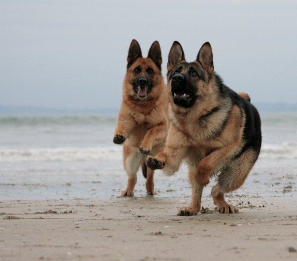 Daïka & Ghelwyn - Balade sur la Plage