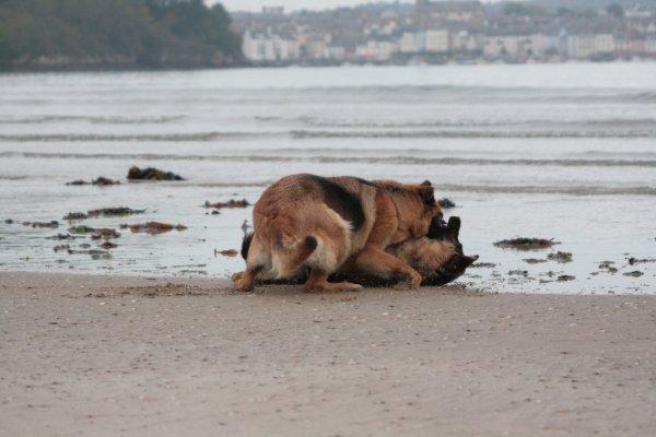 Daïka et Ghelwyn - Balade sur la Plage