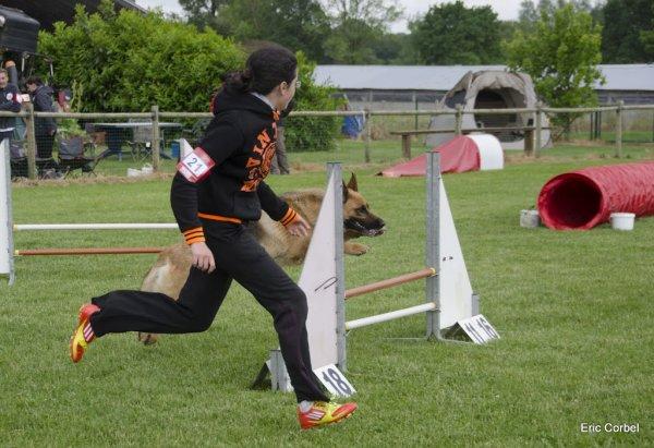 Concours Agility - Concours Interne du Club Canin Saint André