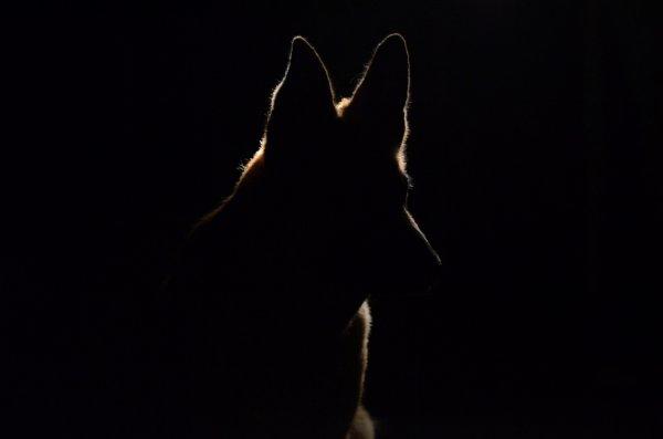 Daïka - Le Loup dans la nuit