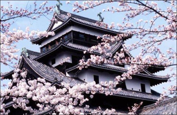 Kyoto (Japon) Temple et cerisiers