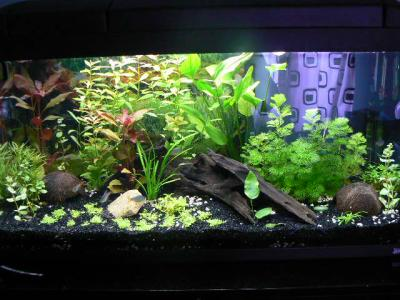 aquarium passion aquarophile 62 by polo. Black Bedroom Furniture Sets. Home Design Ideas