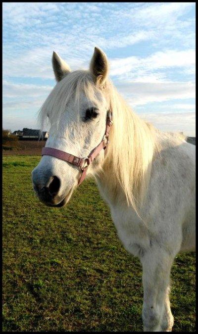 On a tous étaient marqués un jour par une une rencontre avec un poney !