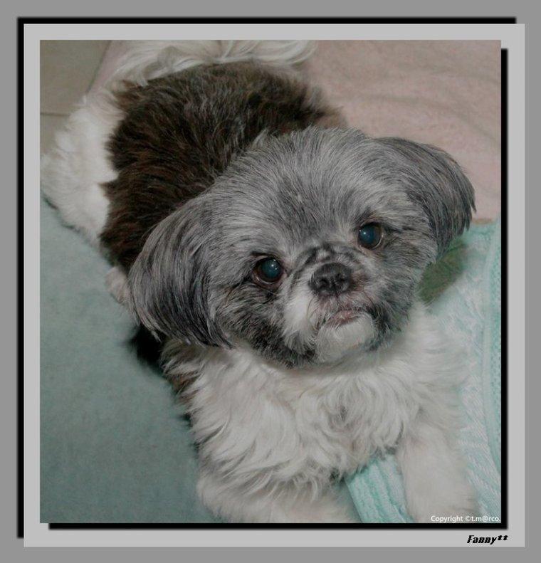 ...Photos de ma  fifille Fanny qui a maintenant 6 ans...je t'aime  Fanny