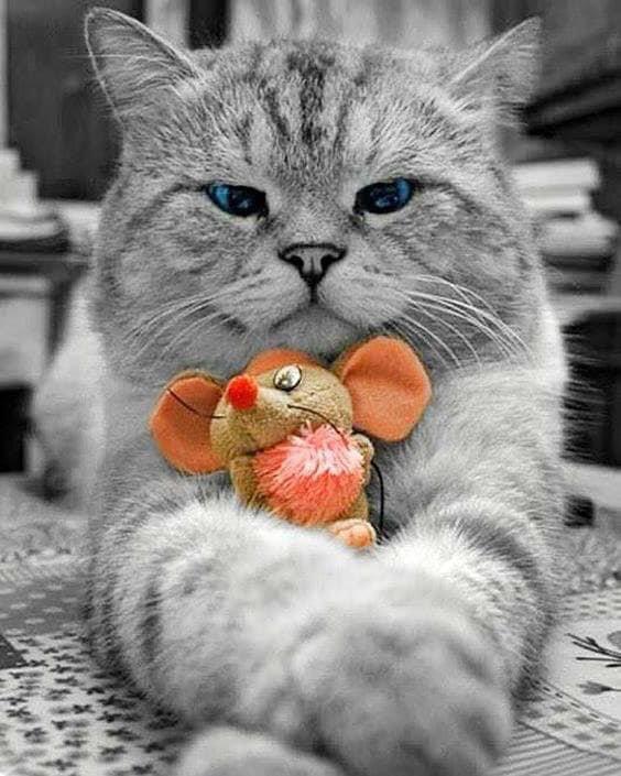 ..Je  reviens  plus  tard  bisous  votre  douce  Manon.... ( image de mon amie  Capucine.) Merci