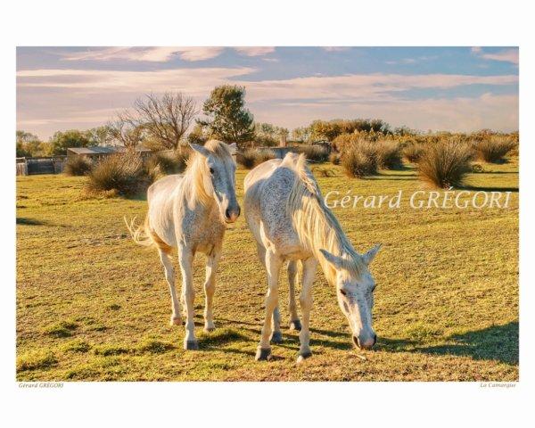 36 provence-la camargue-chevaux-Gérard GRÉGORI