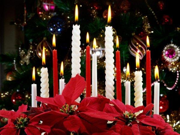 Le Poinsettia a Noel!!!!!!
