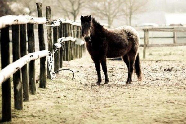 Pony !