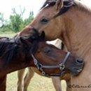 Photo de dream-horse-jumper