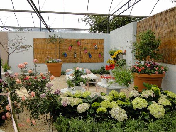 Expoflora 2012 em Holambra - continuação