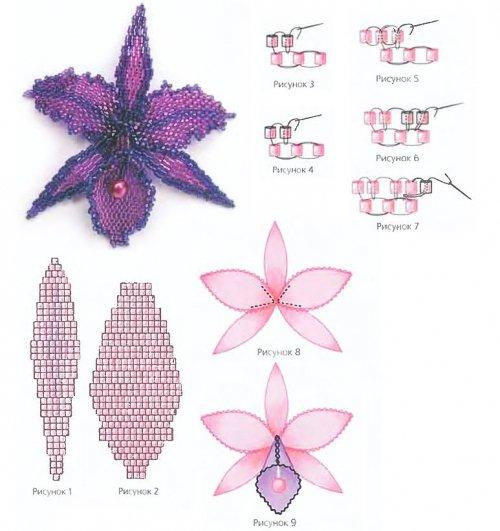 schema orchidée