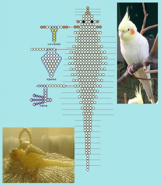 schema perruche