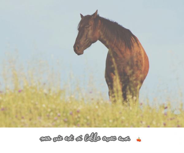"""--"""" Sous la bombe d'un cavalier se cache une tête remplis de rêve à accomplir avec son cheval """"--"""