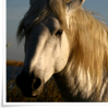 equin-clog