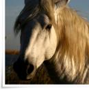 Photo de equin-clog