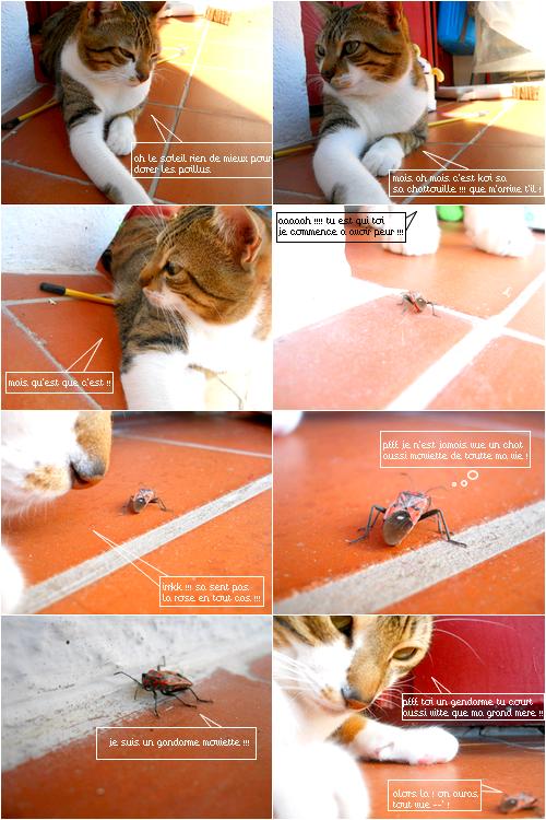 Le chat et le gandarme :)