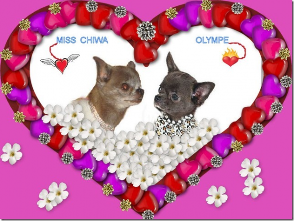 miss chiwa et olympe of tierras calientes