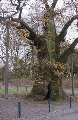 Le bel arbre et l'enfant (Conte pour enfants)/ Bernard DE COMMER & Annik PIRLOT.