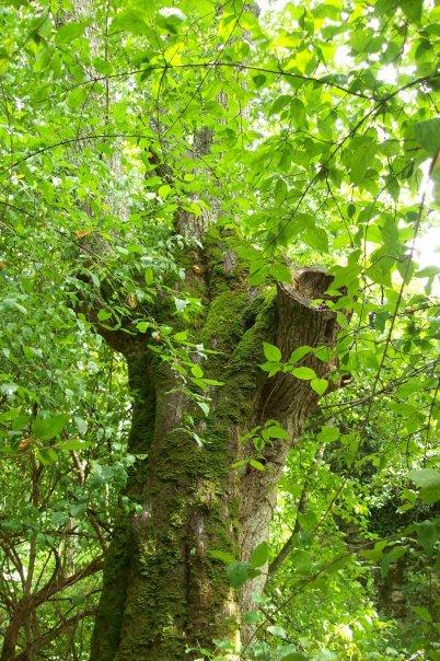 Sois béni bel arbre