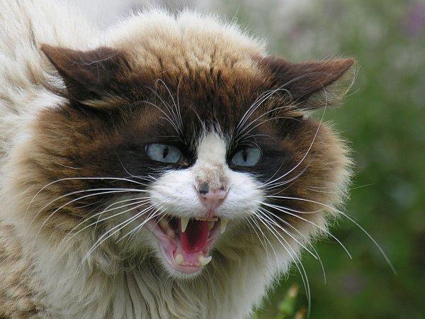 Le chat du Fond Pitot