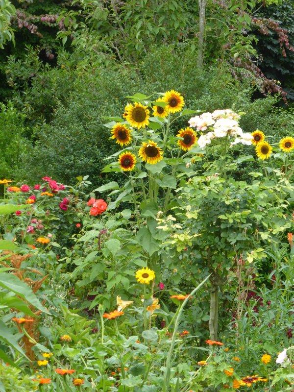 Aux jardins de Monet