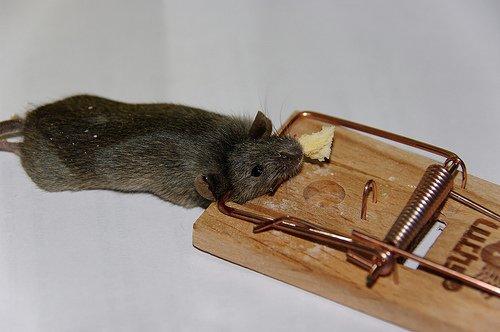 Le marchand de trappes à rats