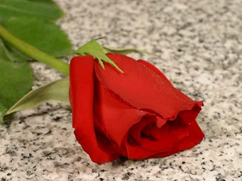 La rose et l'amoureuse.
