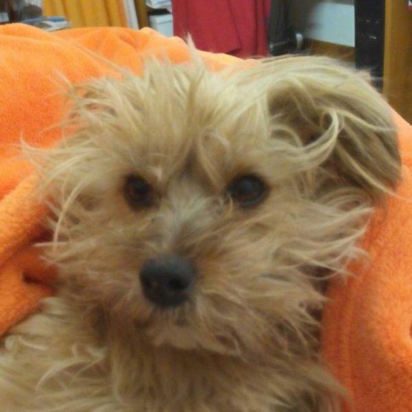 Benghi, le chien qui refusait l'euthanasie.
