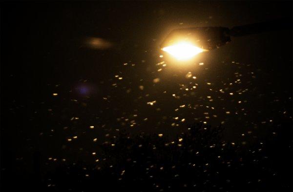 Première neige sur Beaurieux