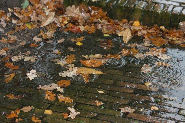 Pluie de février