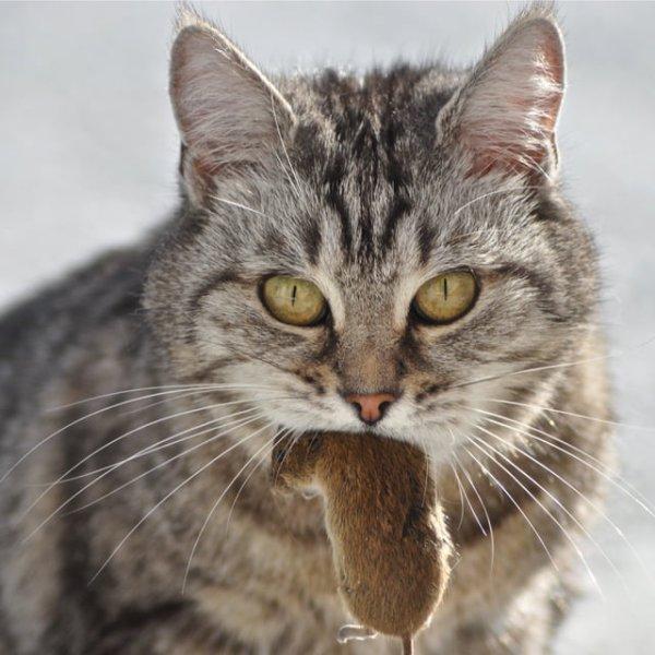 La fille qui voulait protéger les souris