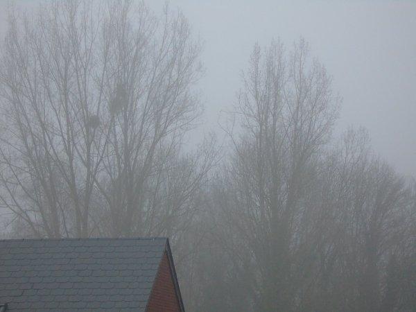Brouillard sur Beaurieux