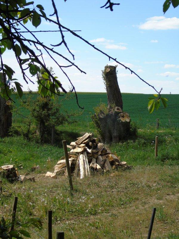 Des bois à Montigny