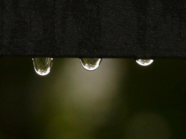 Lambine une goutte de pluie