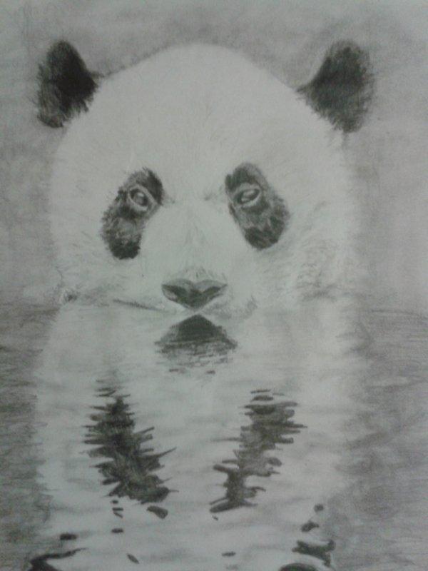 Dessin de PANDA