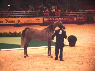 Salon du cheval 2005 mon pur sang arabe palomino - Salon du cheval a mons ...