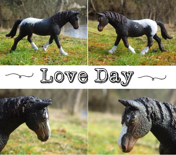 Love Day des Crins Noirs