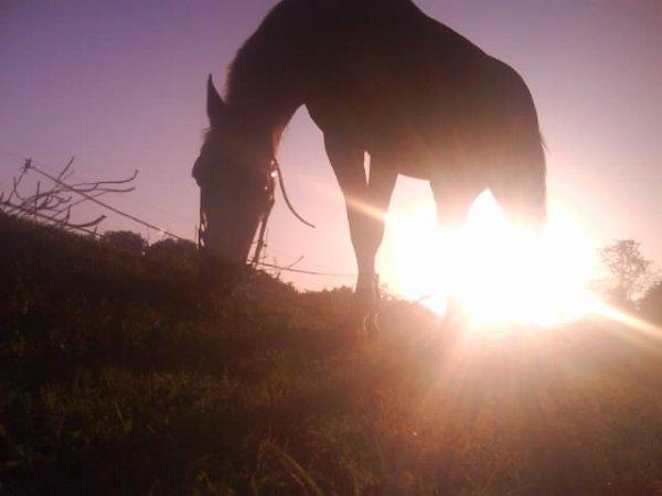 Les chevaux et leurs propriétaires, . . .