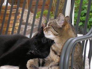 Un grand merci à toutes les personnes qui viennent sur mon blog, qui est là pour la protection des animaux