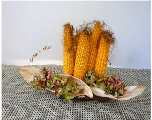 Maïs des champs