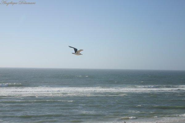 Sur l'océan , J'aimerai naviguer , Sur un oiseau , j'aimerai volé .