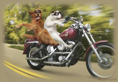 les chiens en moto