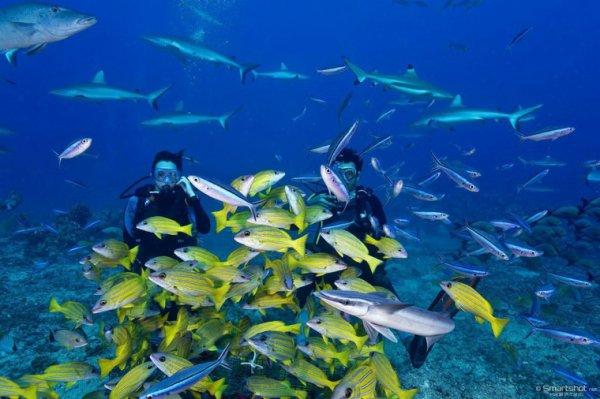 Shooting sous marin avec les requins