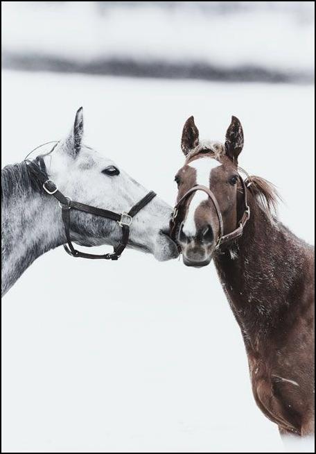 L'équitation est la plus noble expression d'une union charnelle.