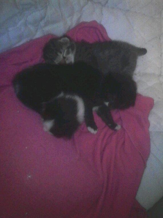 Plume et cest trois bebe