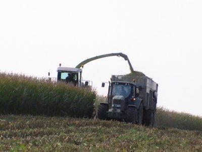 ensilage de maïs 2010
