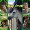 fan-of-horses
