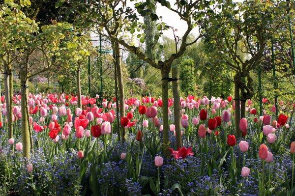 jardins the MONET.