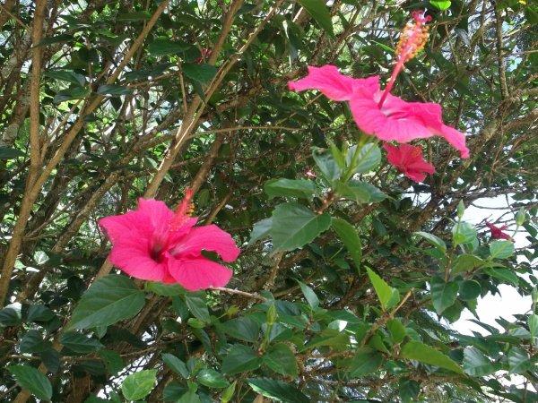 Faune et Flore (2)