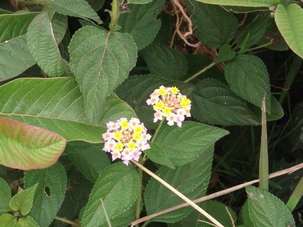 Faune et Flore (3)